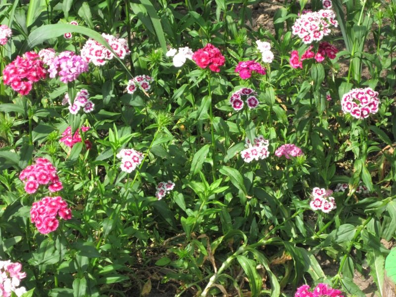 Летние цветы - Дмитрий Никитин
