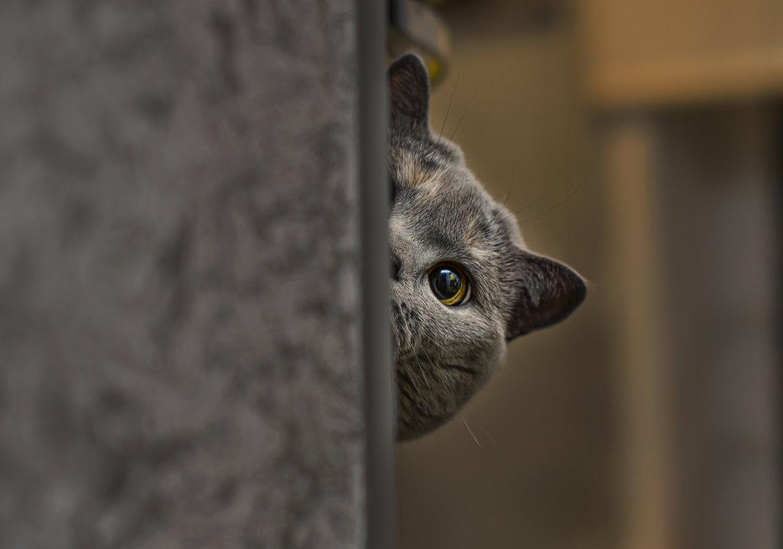 Подглядывать