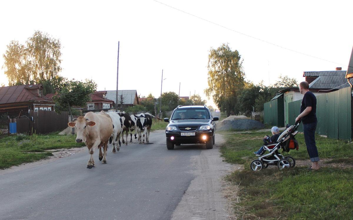 Сельская жизнь - Колибри М
