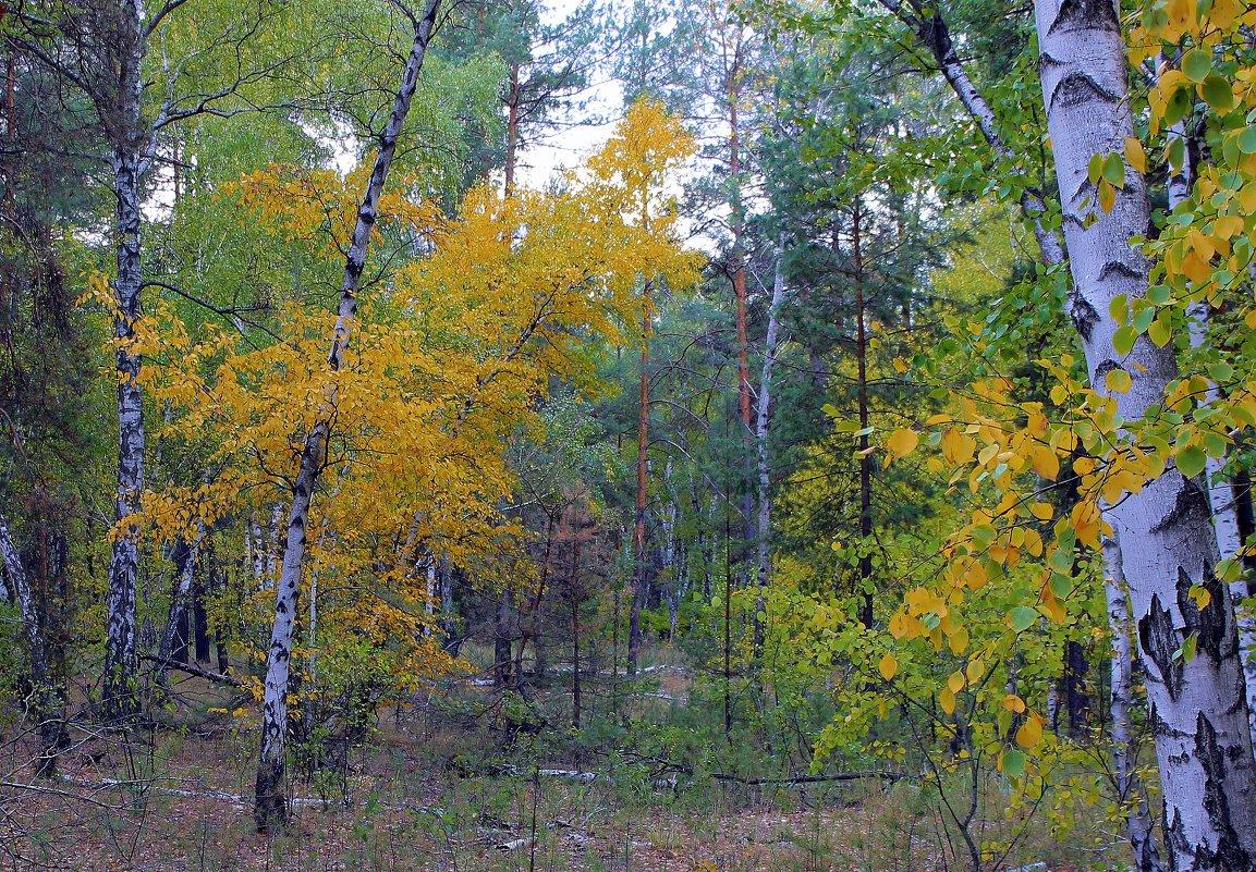 Осень лесу каждый год платит золотом за вход. ( Берестов ) - Валентина ツ ღ✿ღ