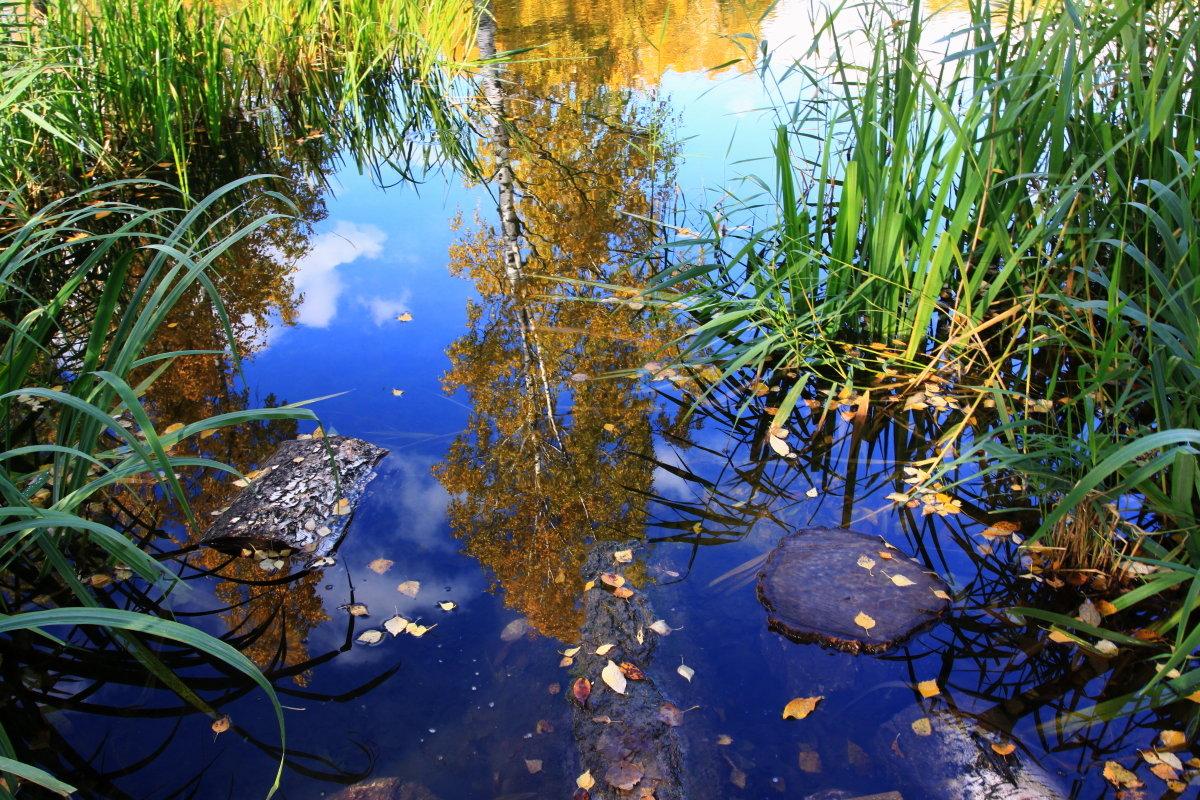Осень в Ботаническом саду. (2) - Николай Кондаков