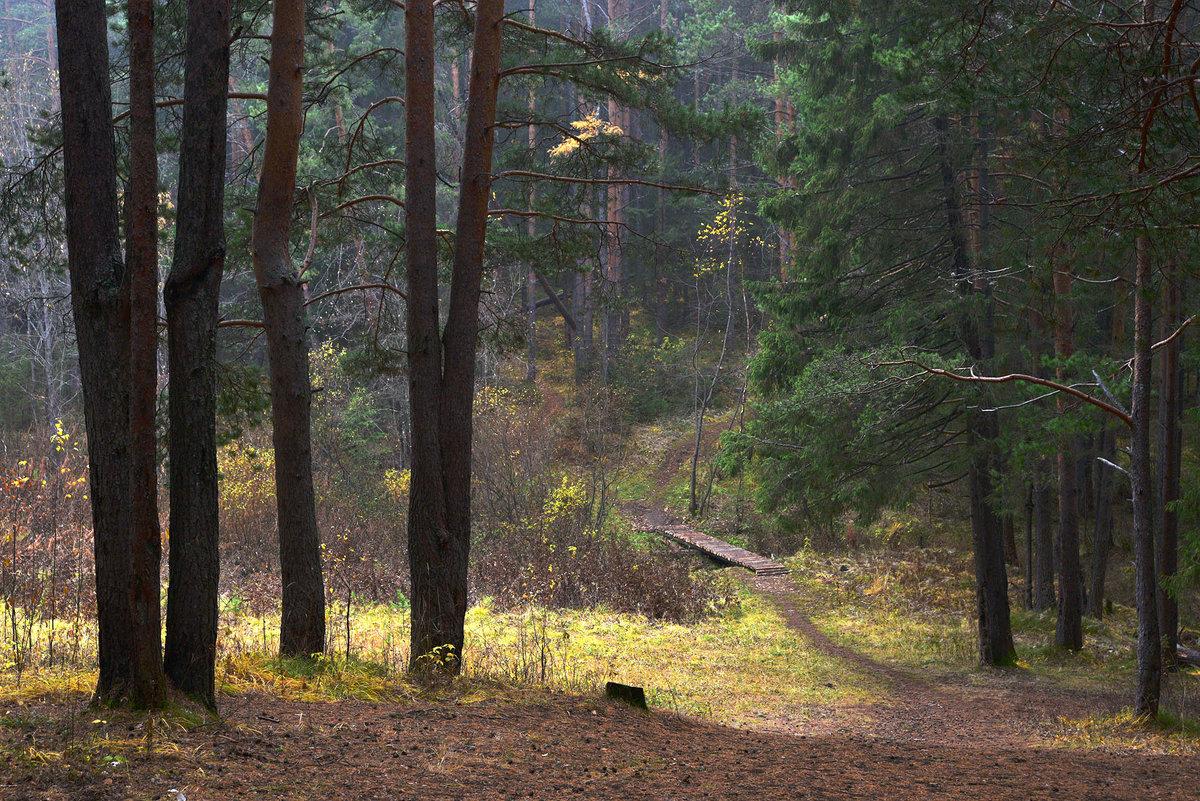 Полянка в лесу. - Наталья