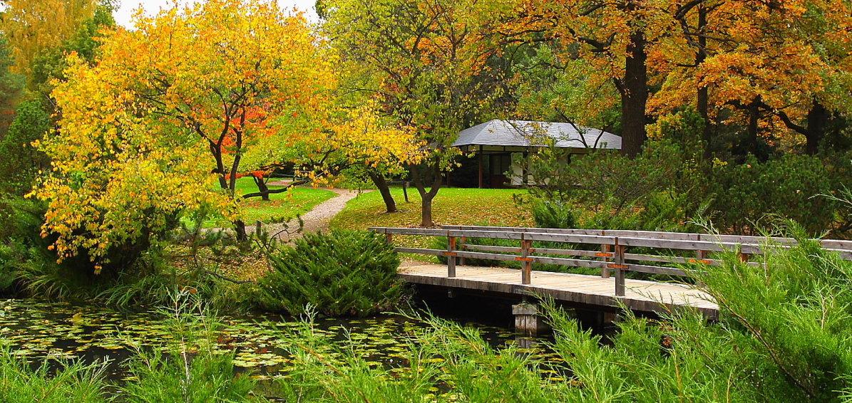 Осенью в Японском саду! - Николай Кондаков