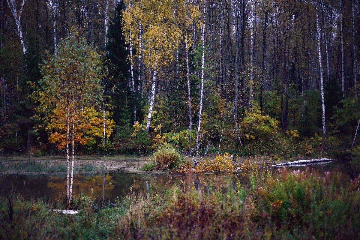 Осень... - Viktor Nogovitsin