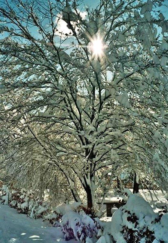 Мороз и солнце! - Натали Пам