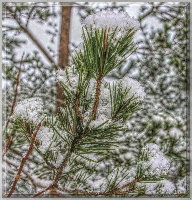 Тихо в зимнем лесу! - Натали Пам