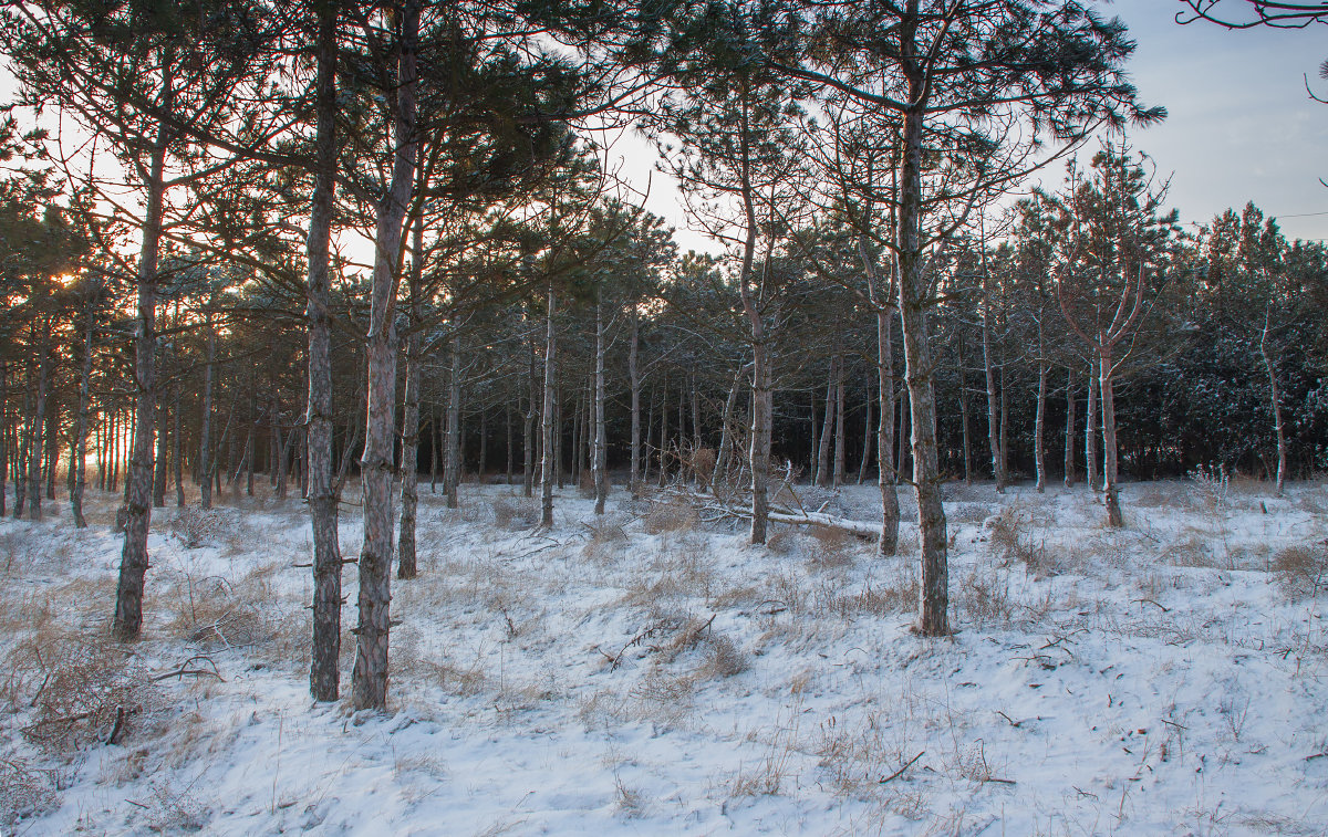 Зимнее утро - Алина Шостик