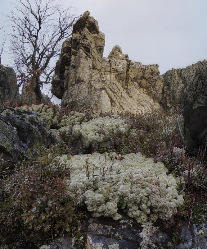 жители высокогорья 3 - Константин Трапезников