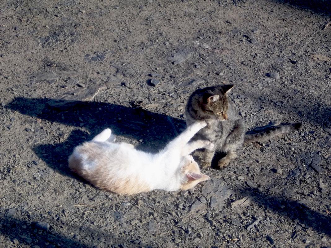 Кот и кошка играют - Татьяна Королёва