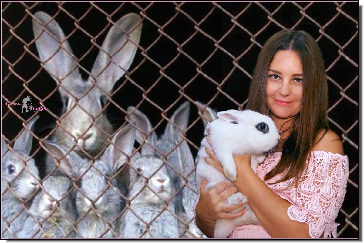 Из жизни кроликов... - Anatol Livtsov