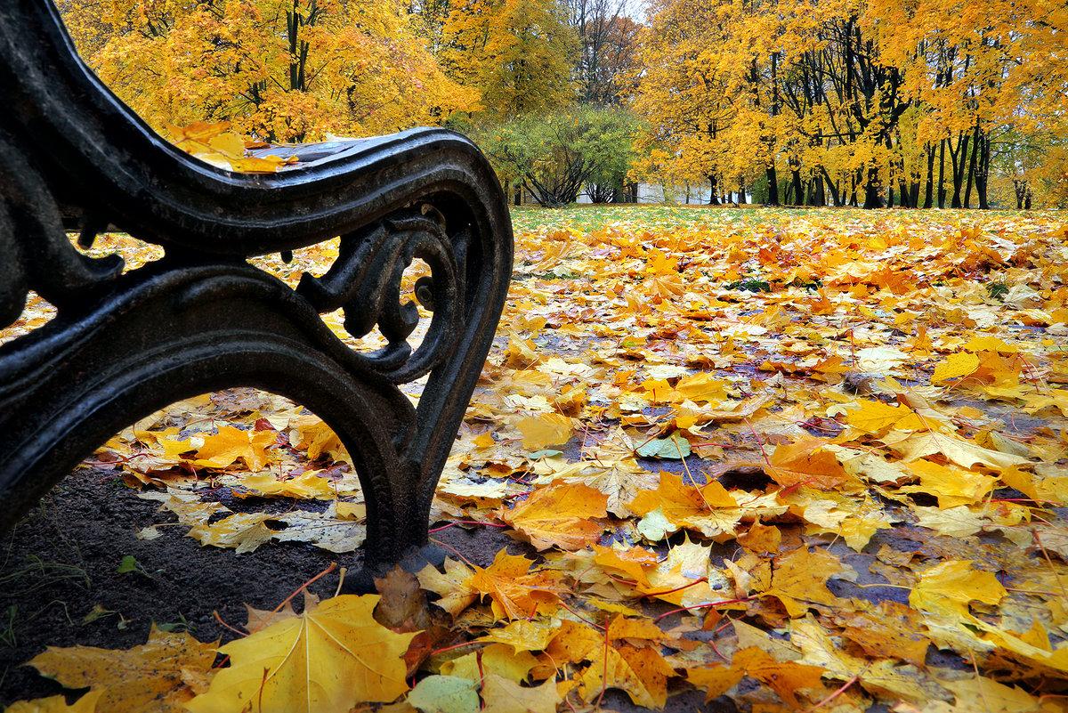 Просто осень... - Андрей Войцехов