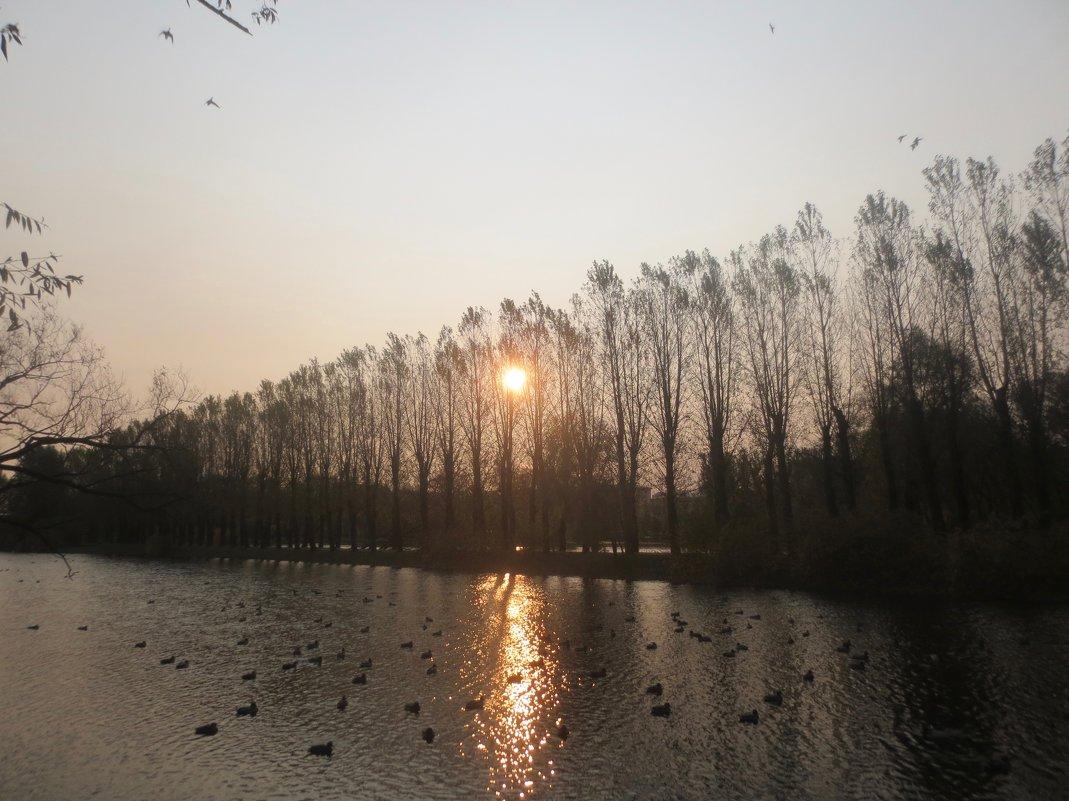 восходящее солнце - Елена