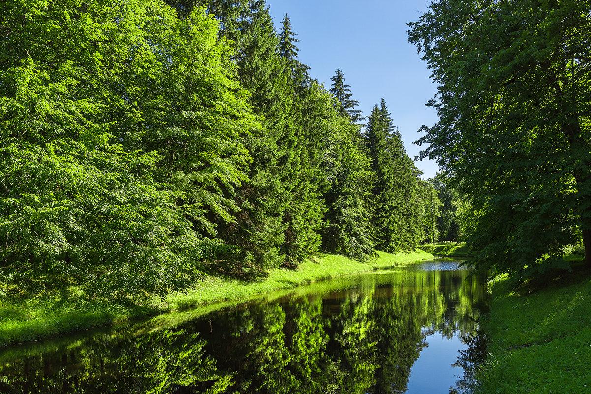 Лесной канал - Сергей Добрыднев