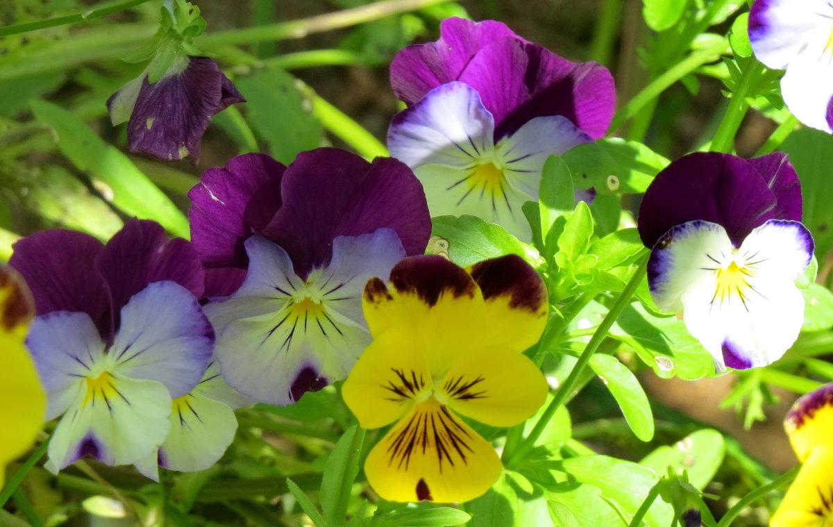 Летние цветы - Светлана Петошина