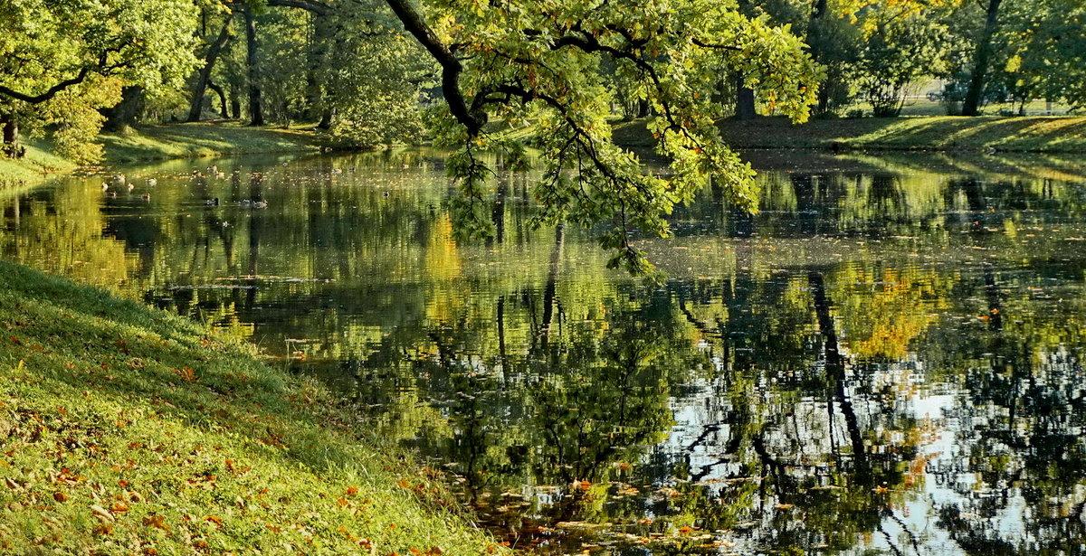 Утренняя прогулочка по островкам парка - Владимир Гилясев