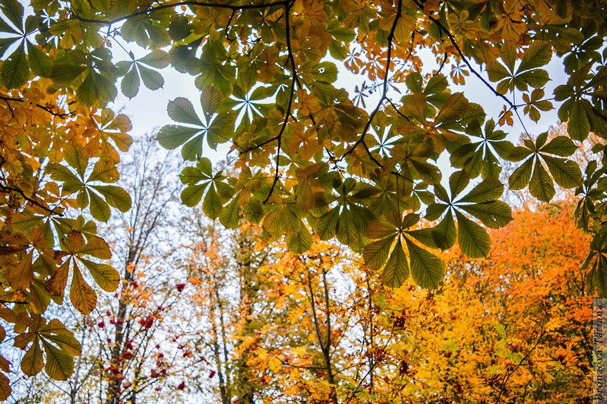 Небо сквозь листву - Татьяна Бронзова