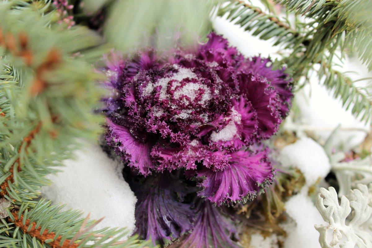 зимние цветы - Anton Лилиенталь