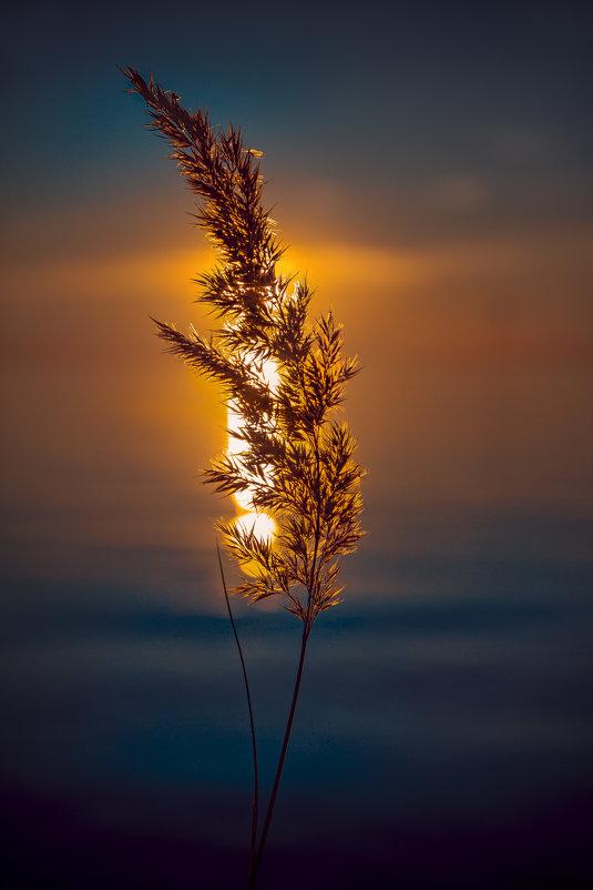 пламя - Deshmidt