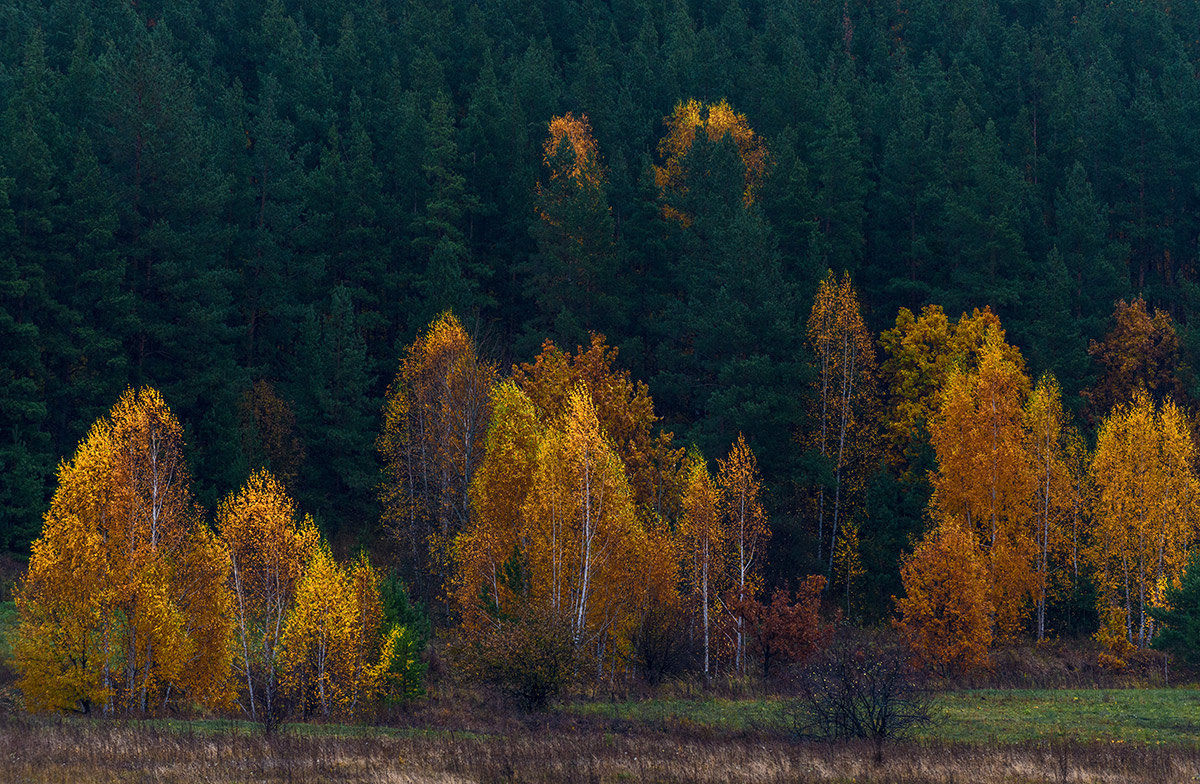 Осень пришла... - Влад Никишин