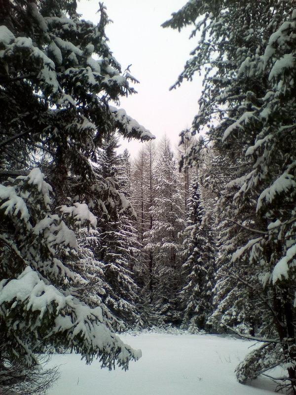 лес - alpman виктор
