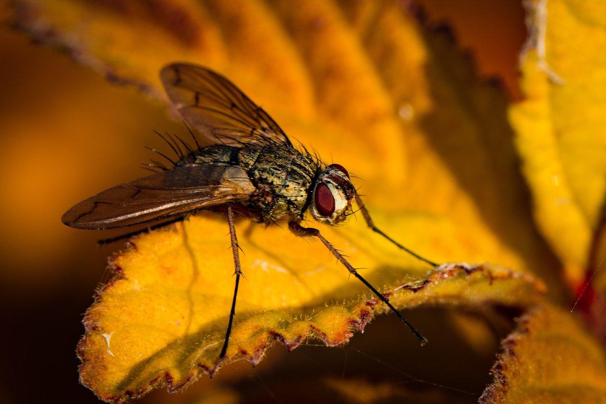 Осенняя муха - Юрий Ричка