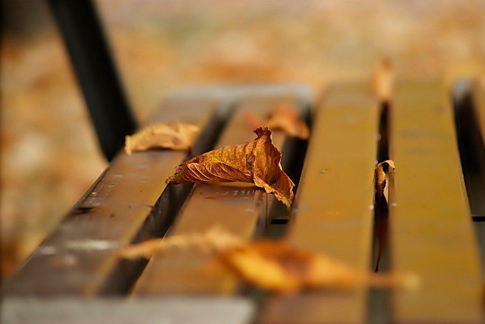 Осенний этюд. - donat