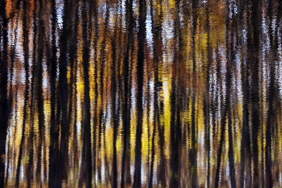 Осенний лес - Алексей Федотов