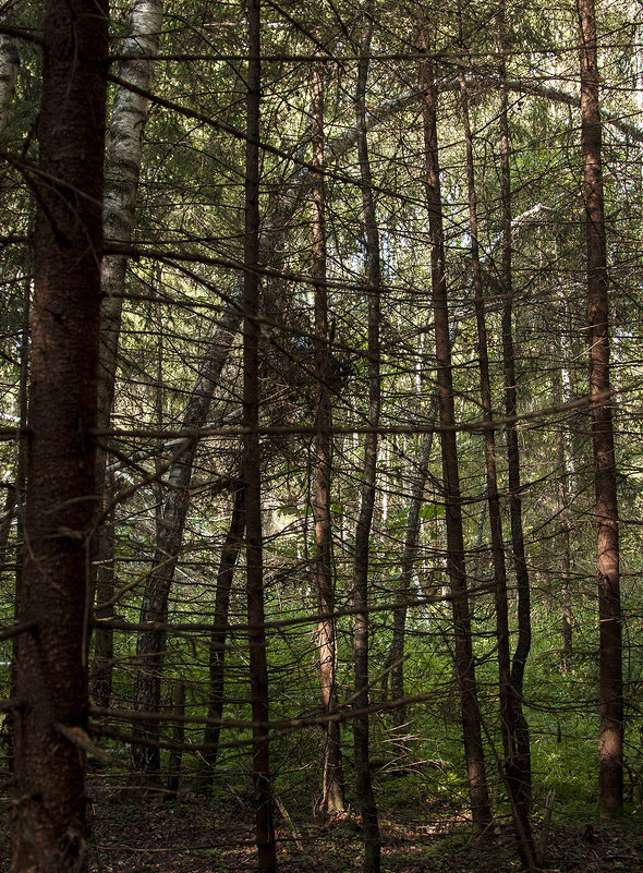 О хаосе и порядке в природе - Константин Konstantin