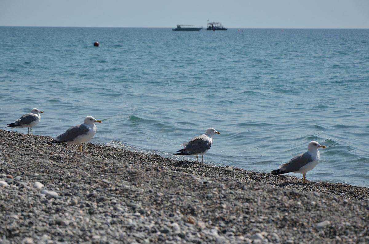 Ну ка, чайки, встань в ряд...... - Ирина Никифорова
