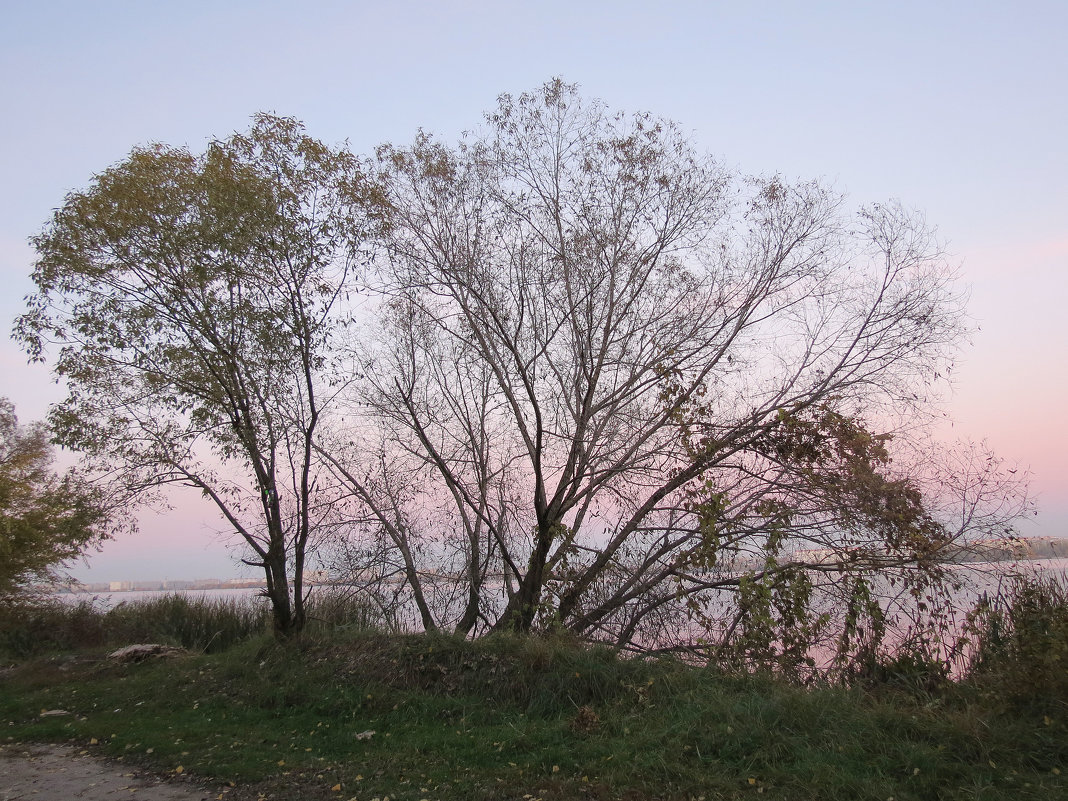 Розовый закат - SaGa