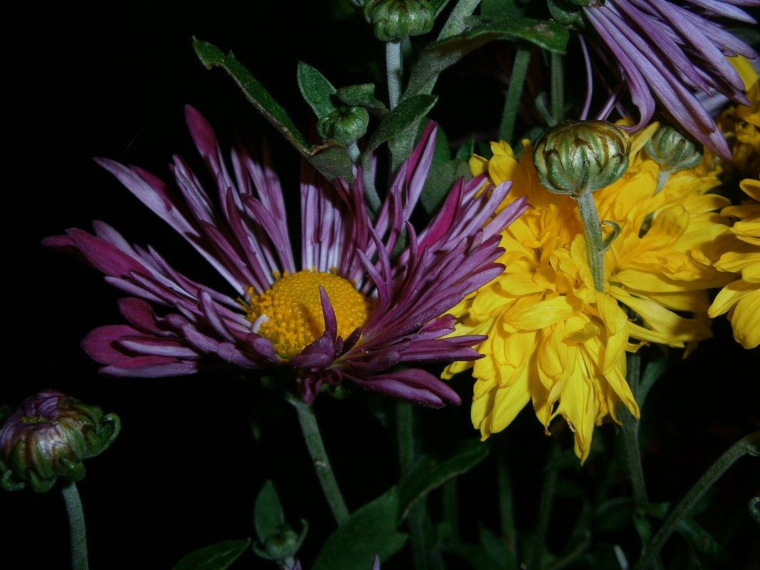 Цветы в ночи - Оксана Шалаева