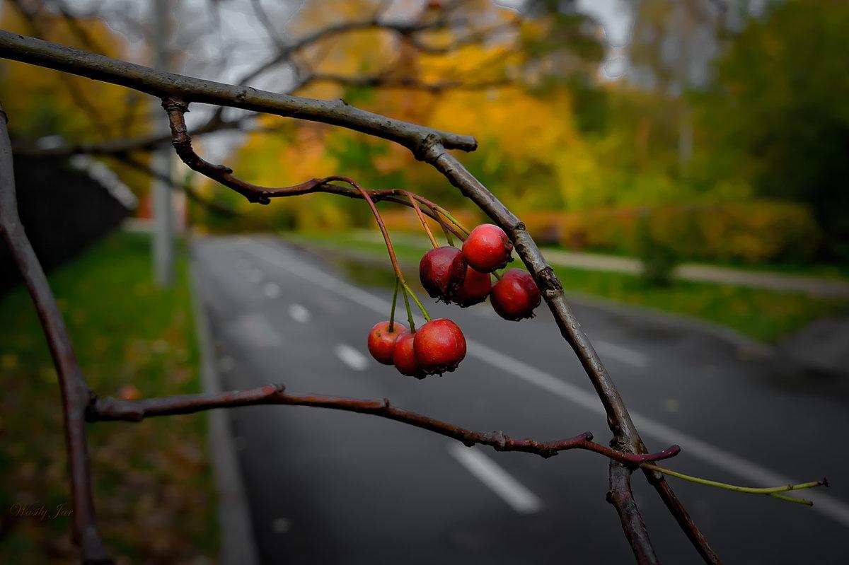 Осенью. - Василий Ярославцев