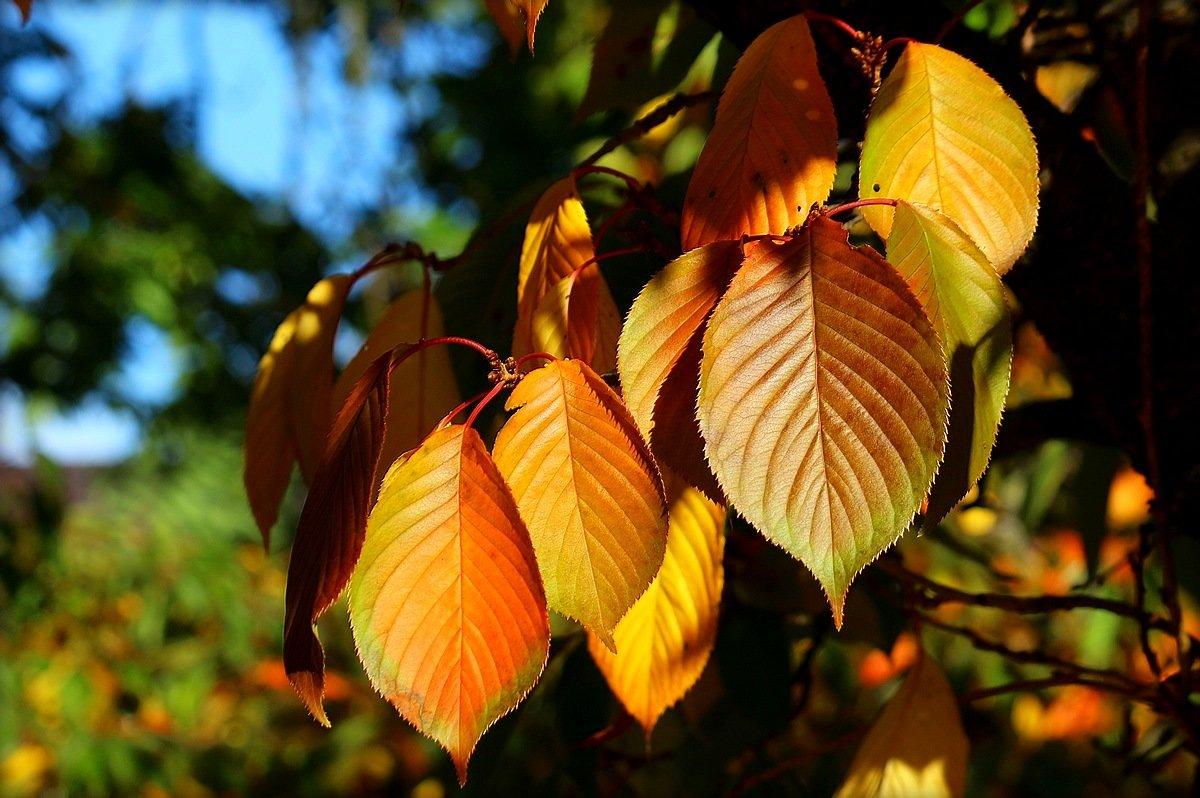 Осенние листья. - Юрий. Шмаков