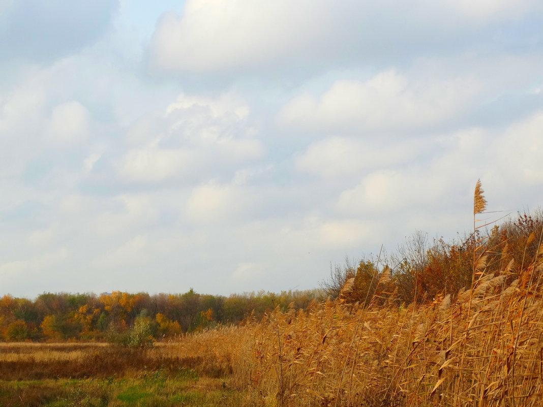 Рыжая красавица осень... - Тамара (st.tamara)