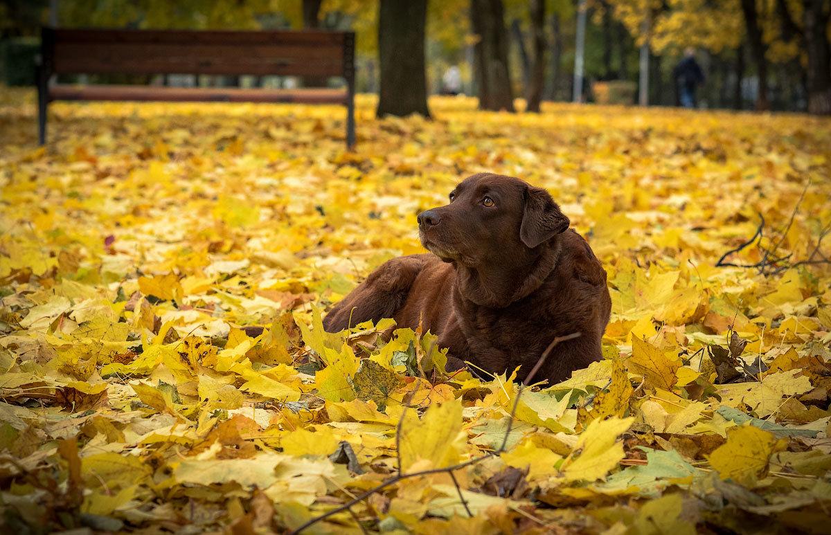 Про собак - Николай