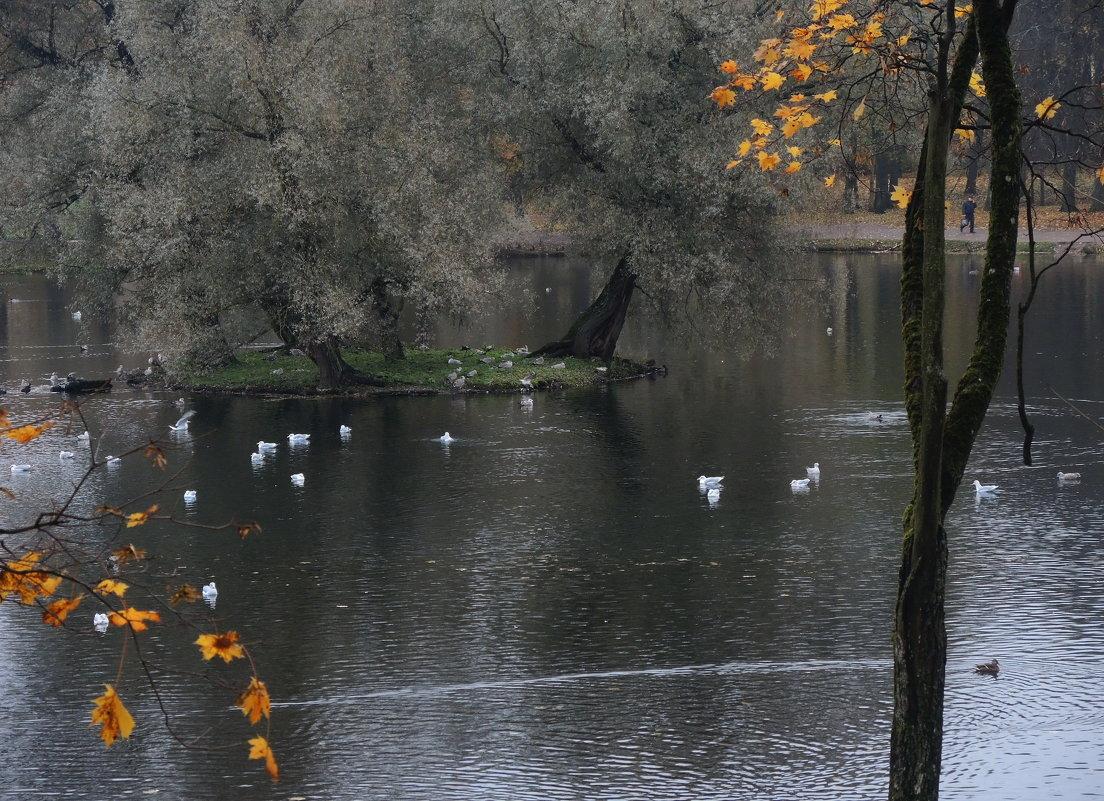 седой остров для седых птиц - sv.kaschuk