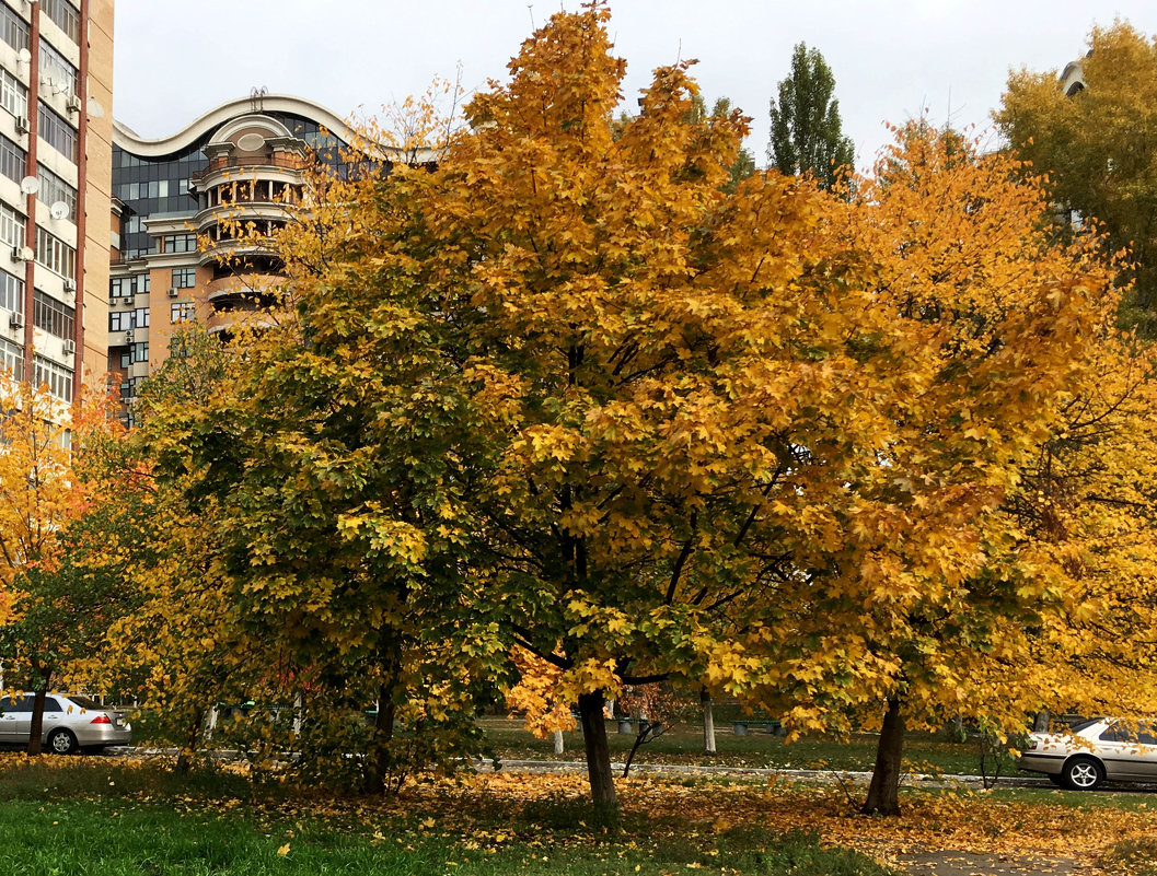 Осень в городе. - Сергей Рубан