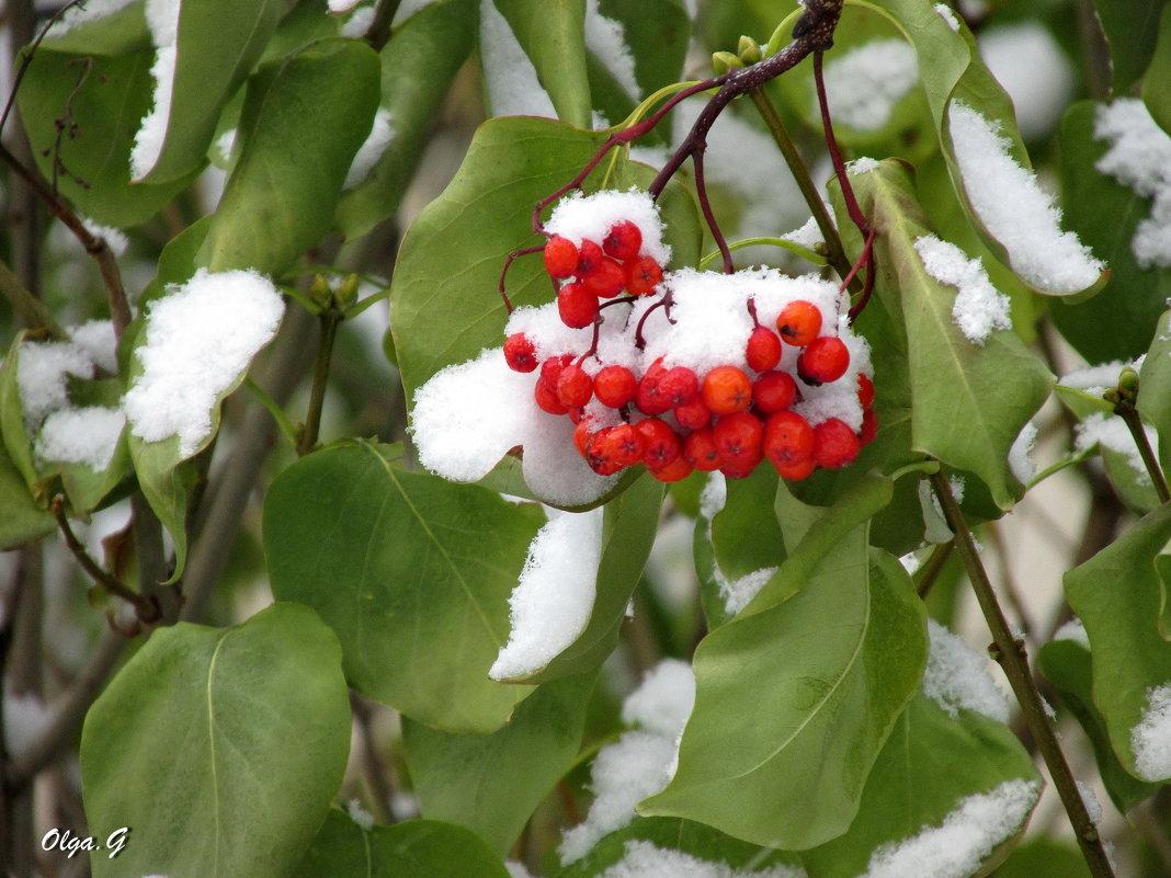 Первый снежок - OLLES