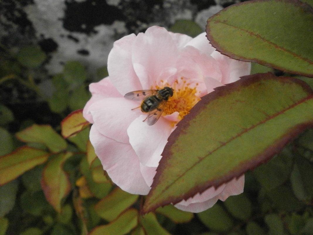 На цветке ... - Алёна Савина