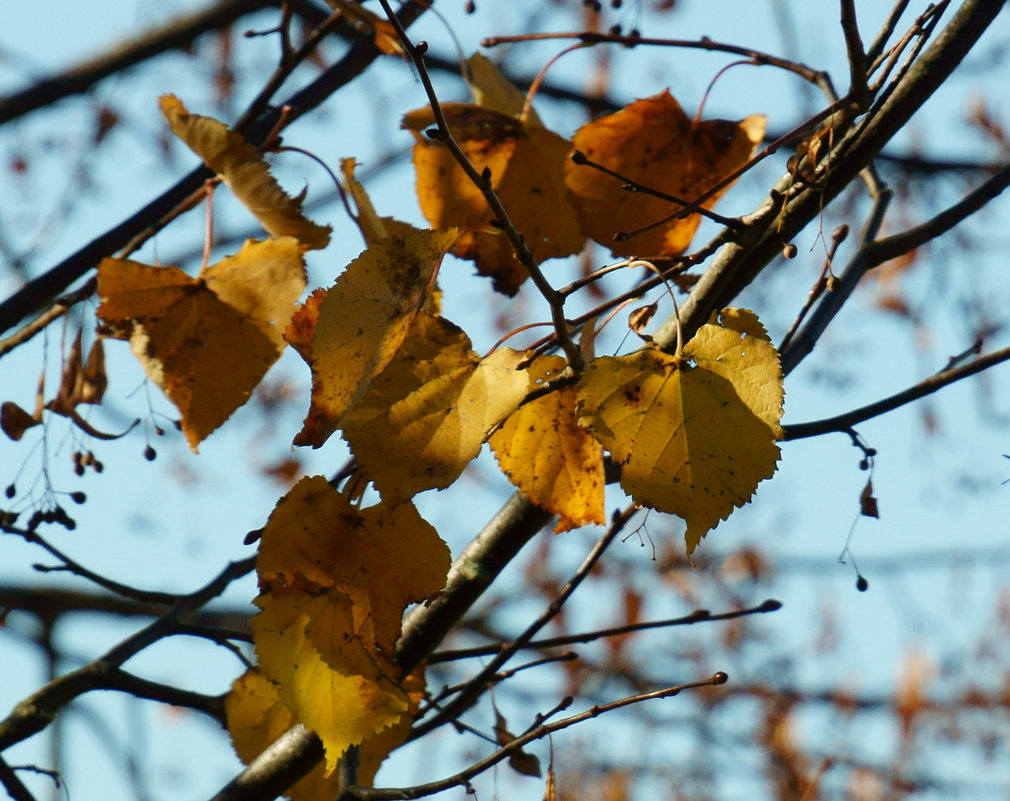 Осенний лист - Михаил Новиков