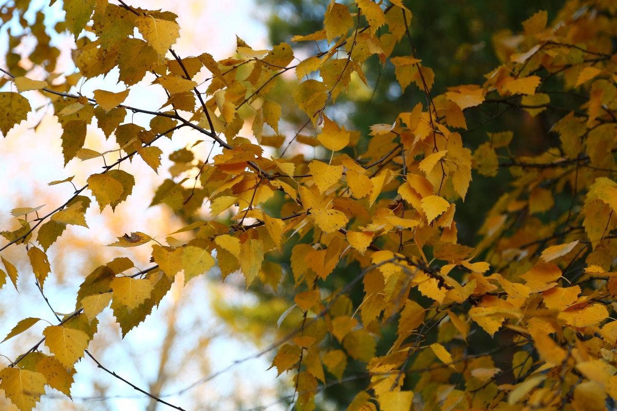 Золотая осень - Марина Щуцких