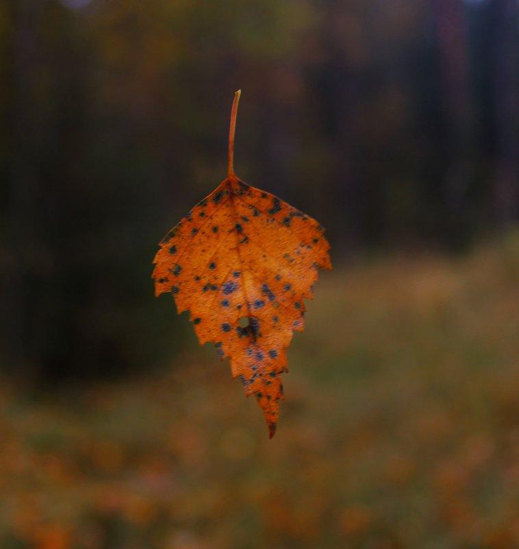 осень - геннадий щербак