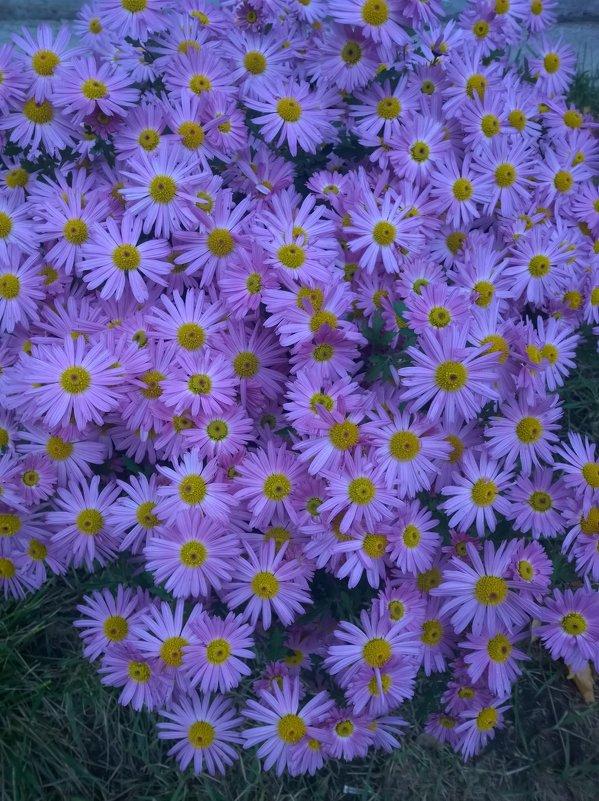 Осенние цветы - Елена Иванкина