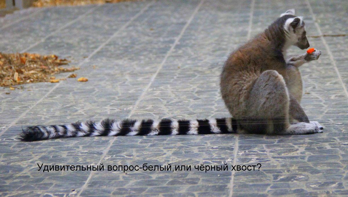 В Белгородском зоопарке - Анатолий Мартынюк