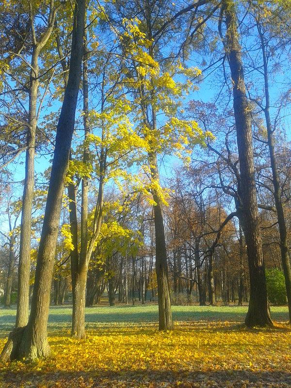 Осеннее утро - Сапсан