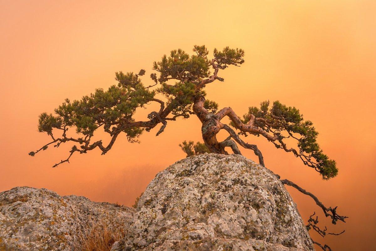 и на камнях растут деревья - Алексей Яковлев