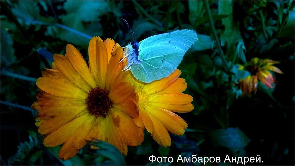 Просто Бабочка - Андрей