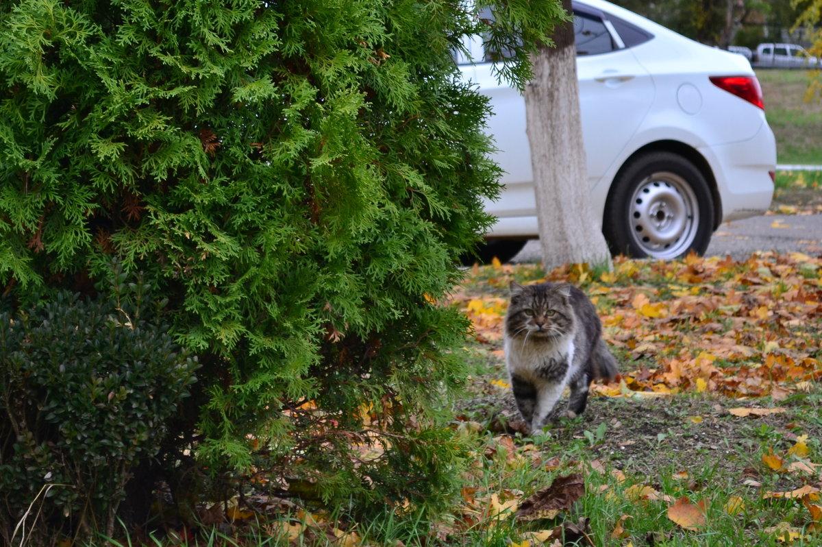 Кот - пpосто кот... - Анастасия Фомина