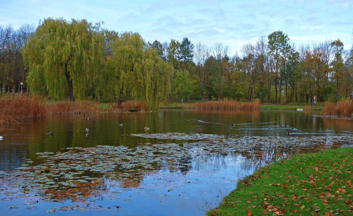 ..Ветер осенний листья срывает,   Вся природа грусти полна... - Galina Dzubina