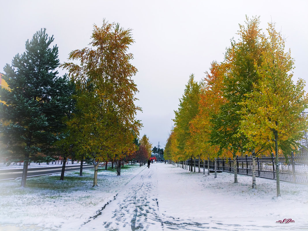 Первый снег - Sadi Omarov